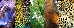Various Animal Prints